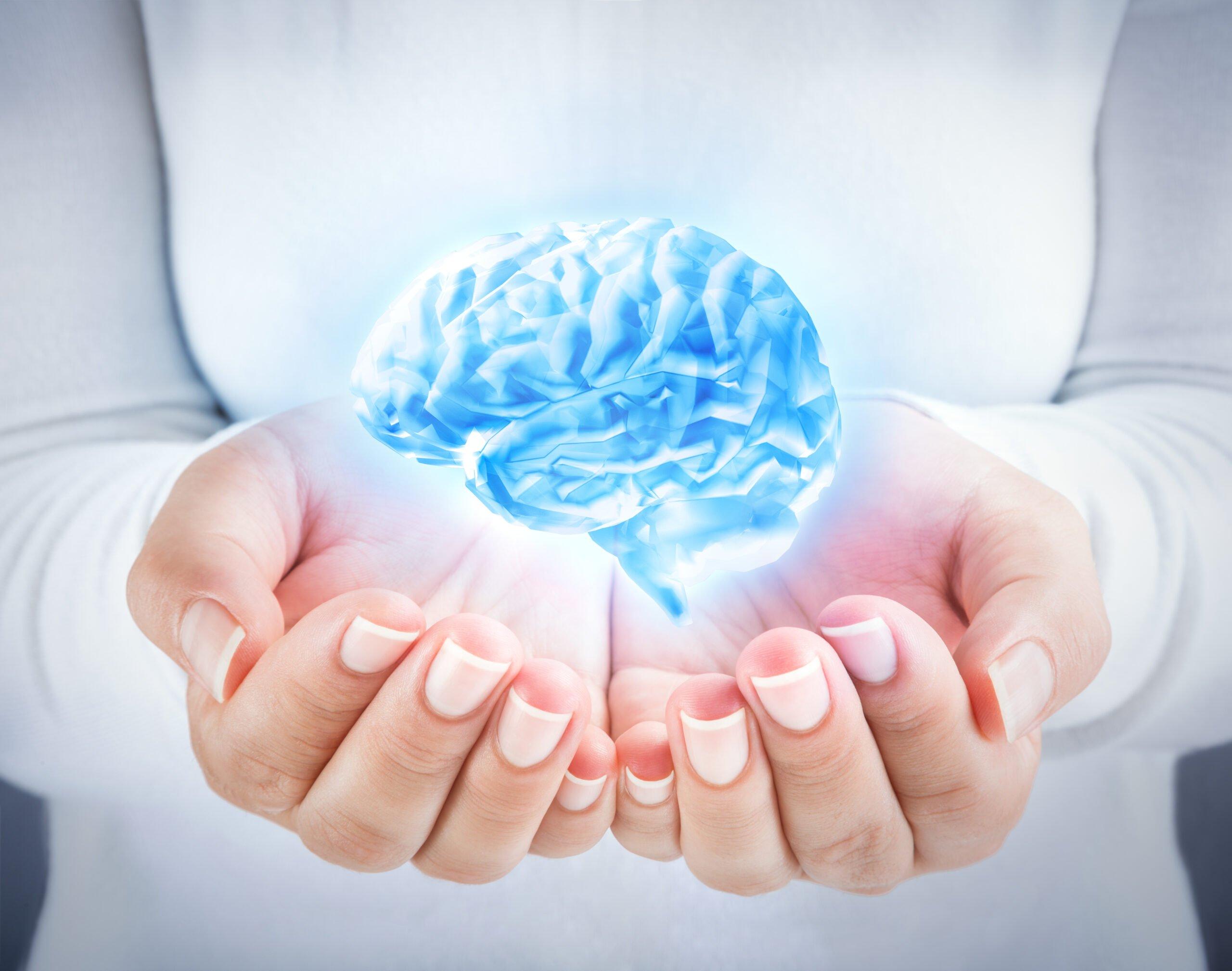 Attachment and Brain Development: Middle Prefrontal Cortex